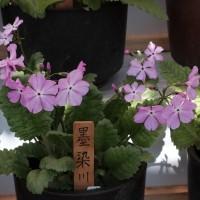 20170419 東京都神代植物公園 11 Fujifilm-Digtal Camera X100T