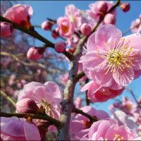 主なしとて春をわするな