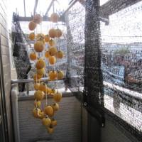 東京の自宅で「干し柿」を作りました。