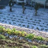 初雪。 2008年1月17日