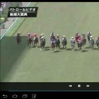 5月10日(日)のつぶやき☆神田のお祭りの馬、競馬場の馬、騎手、アラカルト ☆