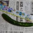 ベランダ野菜:きゅうり