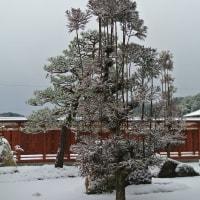 ふくろうの館の庭も雪化粧