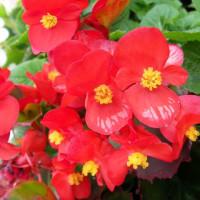 2007-10-23花の美術館01