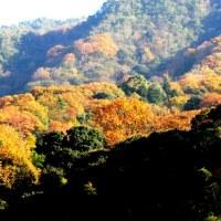 里山も燃える紅葉