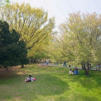 2017.04.16 練馬区 光が丘公園: 新緑に憩う人たち