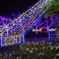 今年の長居植物園イルミ