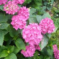 我が家の花🌼