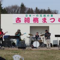 花桃まつり (茨城県古河市)