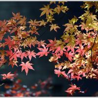 「栃本関跡」の紅葉(埼玉県秩父市大滝 )(2の2) ★ 2016.12.02 ★