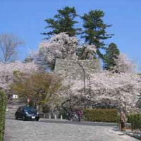 松阪市内の桜の名所