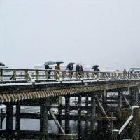 雪の嵐山(2010年12月)