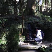 御岩神社の御神木