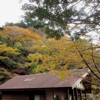 2016年「多良の紅葉」
