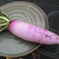 11.30 白菜収穫