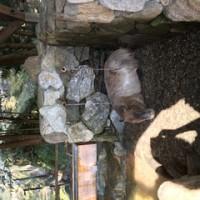 おさわり動物園に行ってきた。