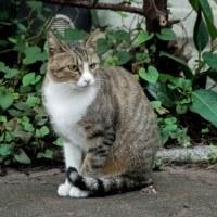 竹瓦温泉近くの猫さん
