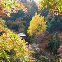 行道山 浄因寺の紅葉