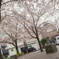 オーベルグランディオ萩中の桜|東京都大田区注文住宅新築一戸建てビーテック