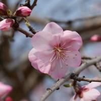 """春の花を求めて""""長居植物園""""に行く・・!"""