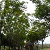 秋留台公園