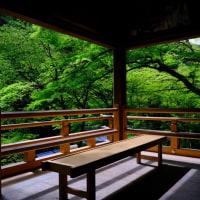 緑に染まる-京都市左京区:貴船神社
