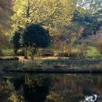 秋の朝~中央公園