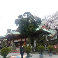 神田明神の桜 2017