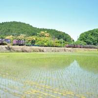 水鏡を行くEF66,福山レールEX(安土)