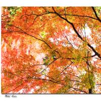 暖かい秋ですね