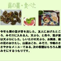 ふき食べた (^◇^)