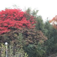 家から見える紅葉