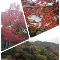 秋の風物詩🍁