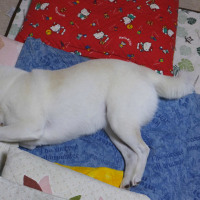 寝ている愛ちゃんに縫いぐるみを並べてみたよ♪