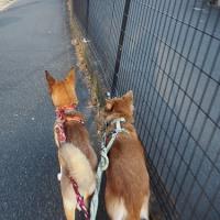 お知らせ&いつも通りのお散歩