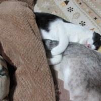 猫とアーモンドの日