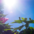 真夏の花たち