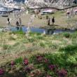 花と湖、富士・箱根 index