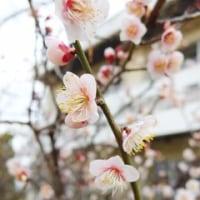 2/23 学校の花