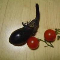かわいい収穫物