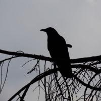 aves 505
