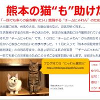 熊本の猫たちへご支援をお願いします