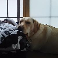 枕を高くして寝るアンジー♪
