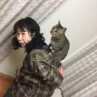 「猫に小判を払う女」