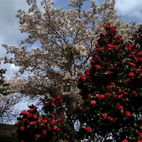 庭は花盛り♪~♪ d(⌒o⌒)b♪~♪
