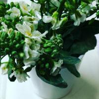 花と野菜のある暮らし-イキテイルモノ