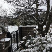 雪 2回目