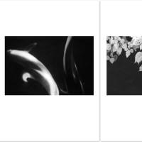 ゴトーマサミ WEB 写真展(229) #Summicron-Straight