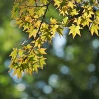 秋に似合う花は