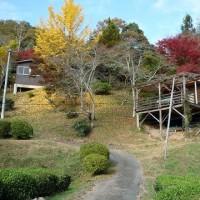 観光農園の紅葉